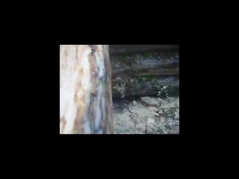 видео: Строим избу, часть 1