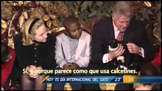 Las Noticias - Hoy se celebra el Día Internacional del Gato