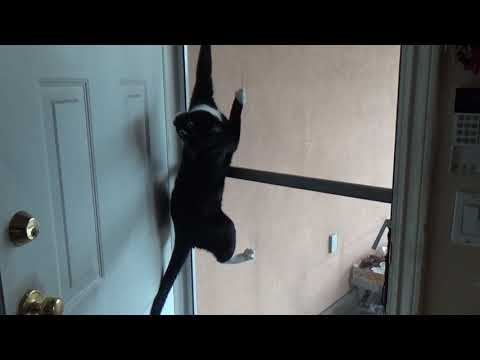 Ninja Cat Escapes: The Sequel (he needed help this time...)