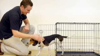 Prevue Home On-the-go Dog Crate Assembly