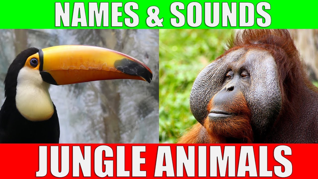 Jungle Animals Names and Sounds for Kids to Learn | Jungle Animals Video for Children