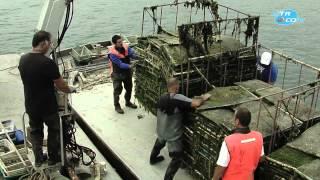 Visite des Parcs à huître de Port Lazo à Plouézec