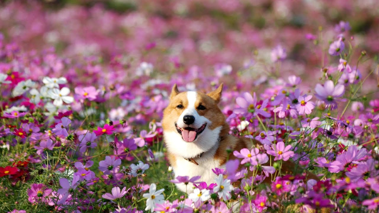 how to get dogs to stop digging in flower beds