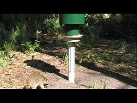 Racoons, Squirrels, Deer, and Turkeys - YouTube