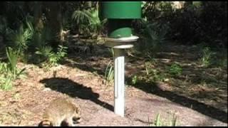 Racoons, Squirrels, Deer, And Turkeys