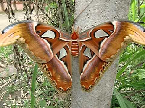 Moths are beautiful too! Get acquainted with them at: