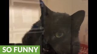 "Hilarious rescue cat literally says ""hello"""