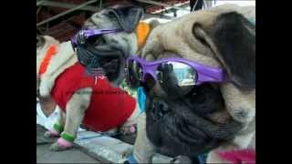 """""""Stylish Dogs in Thiruvananthapuram""""-Asianet News Lens"""