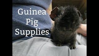 Guinea Pig Supplies: Everything I Use