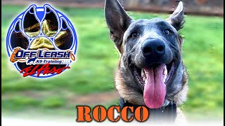 7mo Belgian Malinois, Rocco - Best Dog Trainer - El Paso, TX