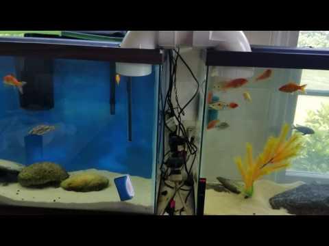 Aquarium Bridge three tanks linked to one another