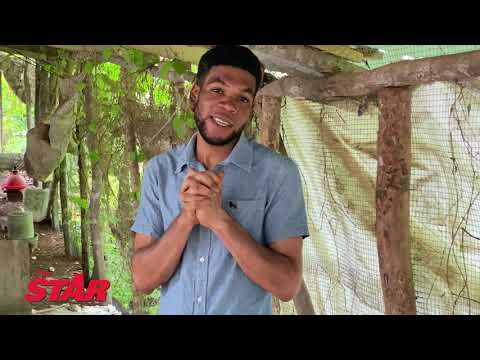 Youth who cried for a job is now a chicken farmer    #JamaicaStar