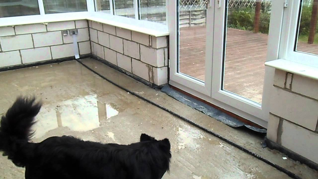 Cat Runs Into Glass Door