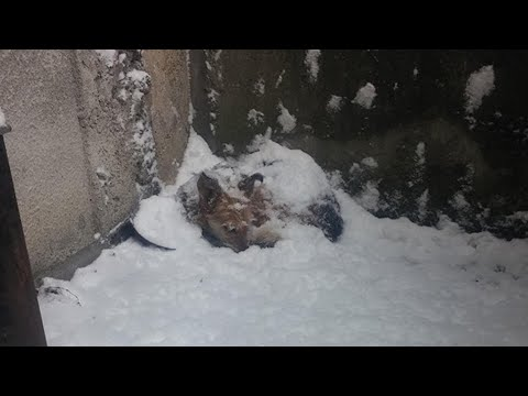 Rescue Poor Puppy was Abandoned and Survivor in Deep Snow at minus 11 degrees | Heartbreaking