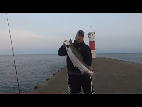 Pier Fishing HUGE STEELHEAD Easy Limit!!!
