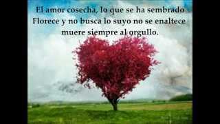El verdadero amor espera - Pescao vivo Letra/Lyrics