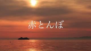 使用オカリナ:亜音エルオーダーAC 木村SF 楽譜 かなでるおもい(亀山豊...