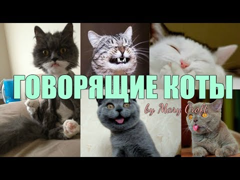 Видео смешное говорящие коты