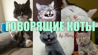СМЕШНЫЕ ГОВОРЯЩИЕ КОТЫ И КОШКИ / ЭТИ ВИДЕО ОБЛЕТЕЛИ ВЕСЬ ИНТЕРНЕТ/ ПОДБОРКА #1 /Talking cats funny