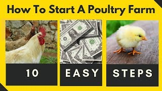 HOW TO START A GHANA POULTRY FARM - 10 EASY STEPS  STARTING A CHICKEN FARM