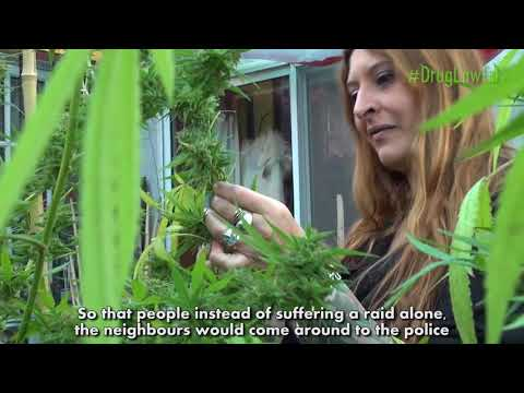 Greendorphin World News Episode #10 Argentina Cannabis News Featuring Rossana Zappia