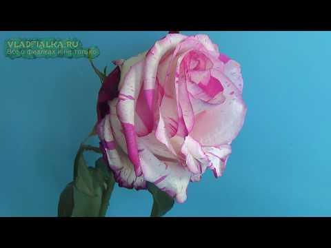 Как оживить розу, чтобы бы она дольше стояла в вазе.