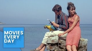Pierrot Le Fou - Movie Review / Analysis