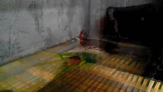 """Сериал """"Говорящая Черепаха"""" серия 4, небольшой вопрос к вам!"""