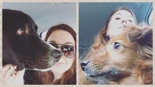Бони поехал в гостиницу для собак:-)