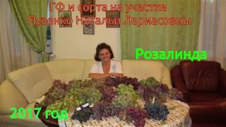 Розалинда- ранний виноград (Пузенко Наталья Лариасовна)