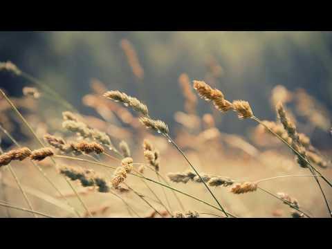 DJ Borra: Those Moments (Original Mix)