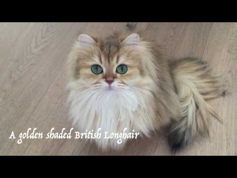 Smoothie The Cat - Compilation