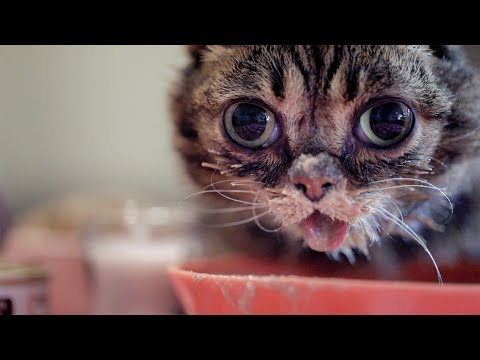 Lil BUB's Thanksgiving Feast