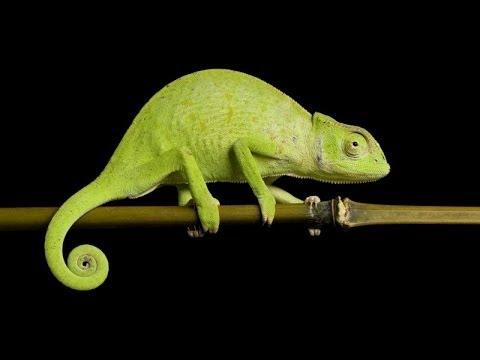 Lizards Down In Africa - 20 Minutes Underground- Episode #61