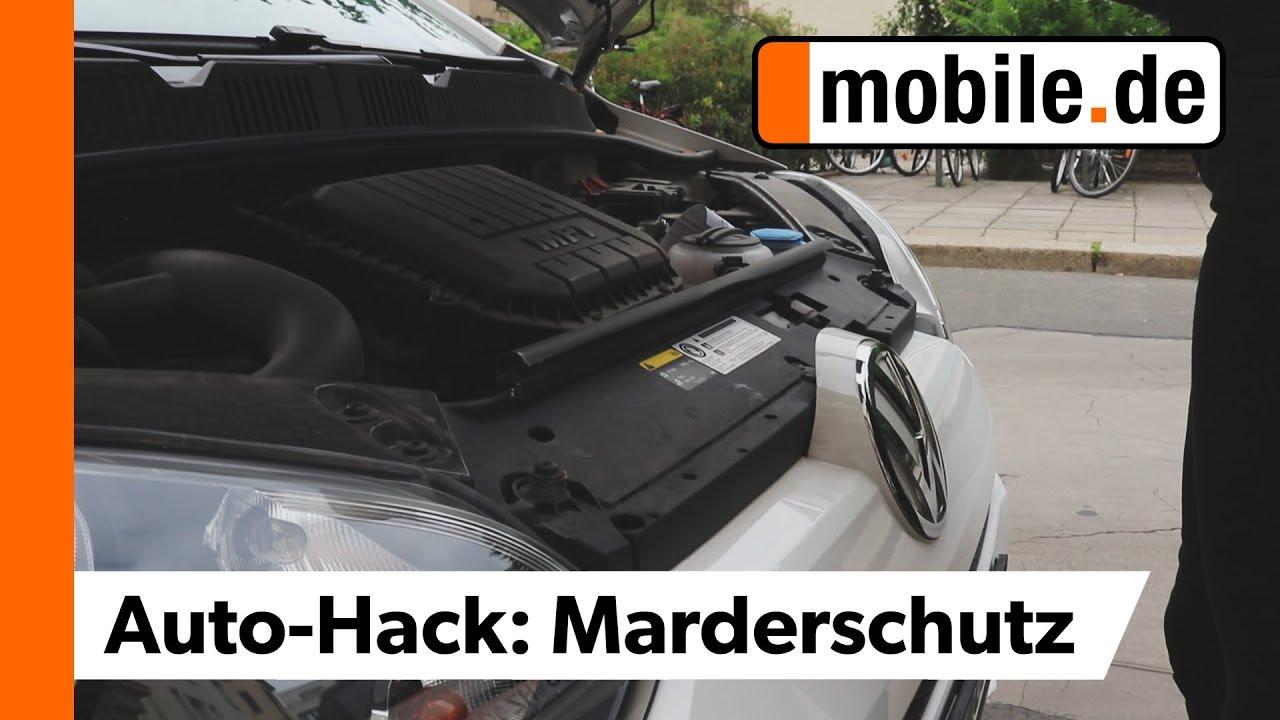 Wie Halte Ich Marder Vom Auto Fern Mobilede Youtube
