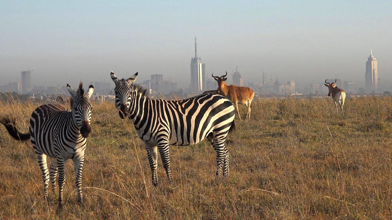 Image result for nairobi national park
