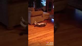 Пора этому коту похудеть