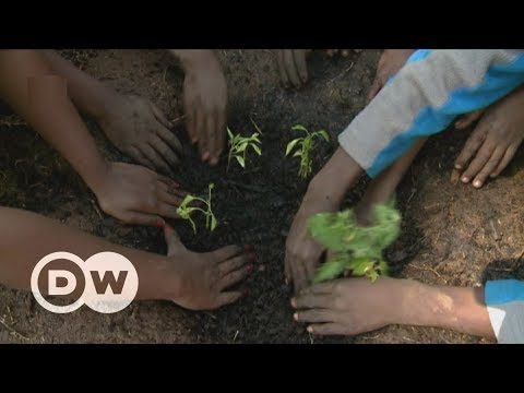 A greener future for Diepsloot's slum kids | DW English