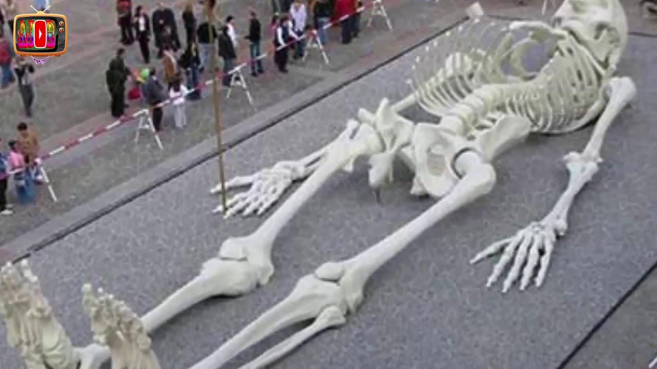Giant Human Skeleton Of 80 Feet Height Found In India Ajob Tv
