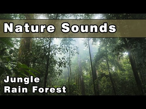 Calming NATURE SOUNDS: Rainforest Sounds, Jungle Sounds, Jungle Rainforest, Bird Sounds, 10 Hours