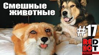 Смешные животные #17 Видео приколы с животными 2018