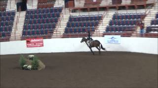 Gingersnap At Harrisburg Horse Show 2014 Equitation