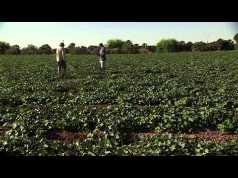 FarmLand Movie Trailer