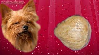 Пателла у собак | Причины | Степени | Лечение.