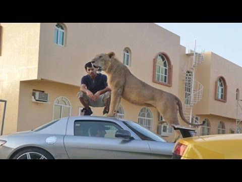UAE bans ownership of wild animals as pets