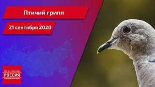 В Энгельсском районе введён карантин из-за очага птичьего гриппа