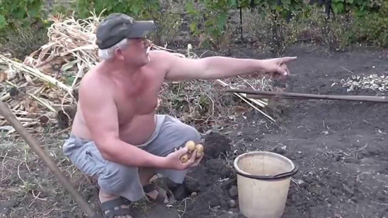 картинки копаем картошку