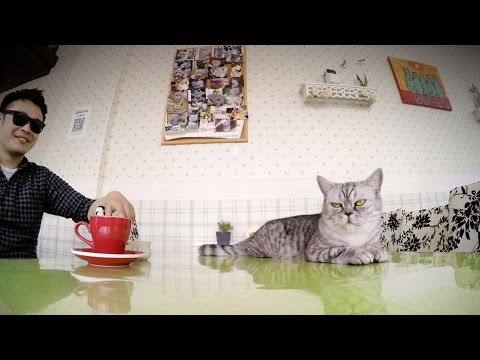 GoPro: Kittens and Coffee - A Cat Cafe in Shanghai