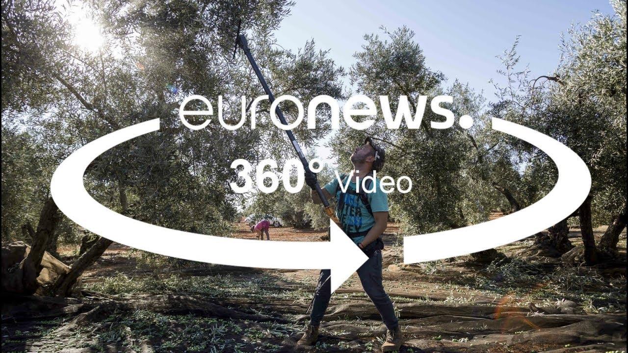 يورو نيوز:رسوم ترامب الجمركية تُضرّ بصناعة الزيتون الإسباني ذائع الصيت