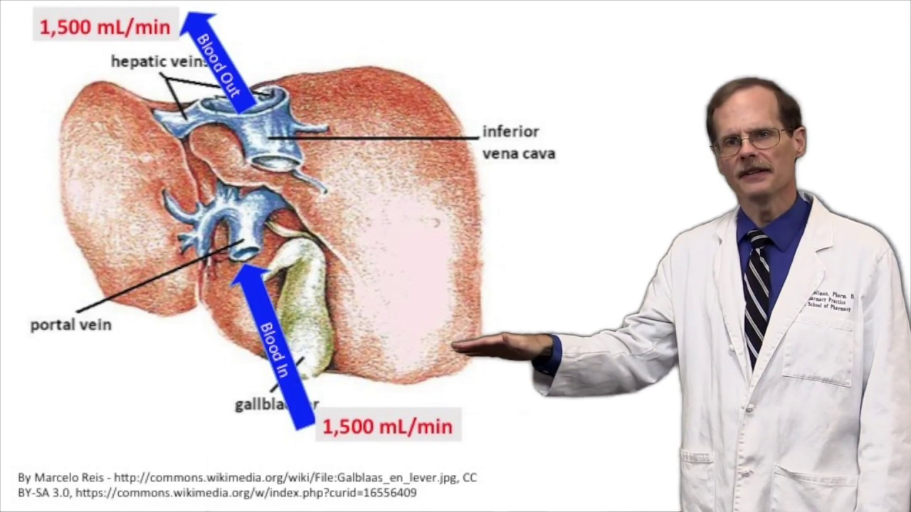 Hepatic Blood Flow Clinical Situations Youtube